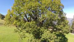 Aerial Footage: Flight over a tree Stock Footage