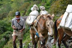 caravan of donkeys carrying supplies in the himalayas - stock photo