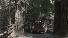 Car driving through redwood tree Stock Footage