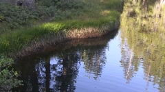 Ducks in a row Stock Footage