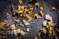 Autumn leafage Stock Photos