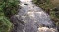 4k Wild river closeup low mountain range Harz 4k or 4k+ Resolution