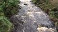 Wild river closeup low mountain range Harz HD Footage