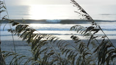 Sea oats frame Atlantic Ocean surf and runner Stock Footage