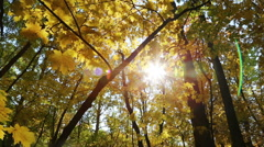 Beautiful autumn yellow leaves and sun - slider dolly shot Stock Footage