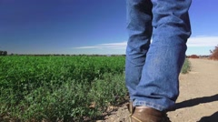 Alfalfa farmer in the field Stock Footage