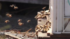 Bee hive, bees returning home Stock Footage