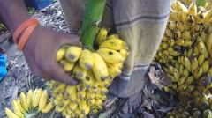 Stock Video Footage of View of man preparing bananas for the sale at the local market.