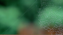 Spider Web Rain Falling In Background Stock Footage