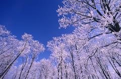 Stock Photo of Hoar Frost
