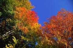 Fall Colours, Gatineau Region, Quebec, Canada - stock photo
