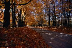 Gatineau Parkway in Autumn, Quebec, Canada - stock photo