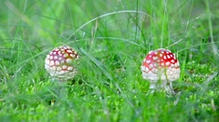 Fantastic fairytail fungi magic mushrooms blowing in the breeze against a gre Stock Footage