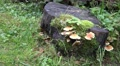 4k Wood and Tree Fungi at cutted mossy tree trunk 4k or 4k+ Resolution