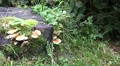 Wood and Tree Fungi panning at cutted tree trunk HD Footage