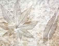 Leaf cement Stock Photos