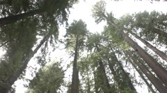 Red woods in lansdale grove with a car driving 2 Stock Footage