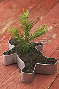 Seedling in Cookie Cutter - stock photo