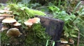 4k Wood and Tree Fungi closeup panning at cutted tree trunk 4k or 4k+ Resolution