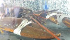 Lobster In Tank Stock Footage