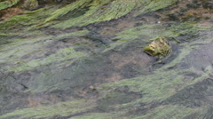 Water plants in a stream water at Pottenstein (Germany) Stock Footage