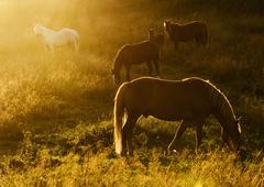 Magic herd Stock Photos