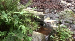 4k Waterfall bottom with schistous rock and ferns pan in Harz mountains Stock Footage