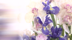 Abstract composition of flowers and ice. Background. Stock Footage
