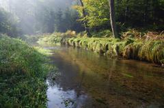 Stream through Forest, Elbe Sandstone Mountains, Saxon Switzerland, Saxony, Stock Photos