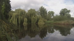 Wind blows through willows. - stock footage