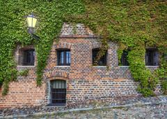 Old red brick wall with wild grapes. Stock Photos