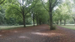 The wind blows gently through the trees in a lane  in the Amsterdamse Bos Stock Footage