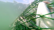 Commercial fishing of salmon - stock footage