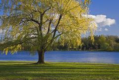 Dows Lake, Ottawa, Ontario, Canada Stock Photos