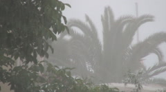 Palm in tropical storm on the island. Typhoon. Hurricane.Bad weather. Stock Footage