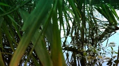 Dreamy reflections of reeds in lake water Stock Footage