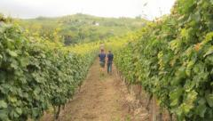 Experts touring the vineyard Stock Footage