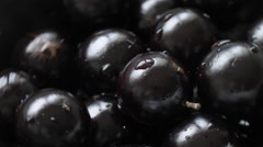 Jabuticaba. Brazilian tropical fruits. Stock Footage