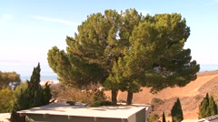 Timelapse shot of a tree being trimmed. Stock Footage