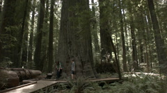 Two people walking by founders tree redwood Stock Footage