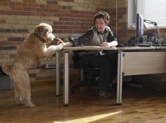 Dog Trying to get Man's Attention - stock photo