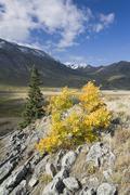 Livingston Range, Bob Creek Wildland Provincial Park, Rocky Mountains, Alberta, Stock Photos