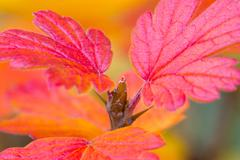 Close-Up of Autumn Leaves Stock Photos
