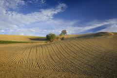 Stock Photo of Overview of Farmland, Andalucia, Spain