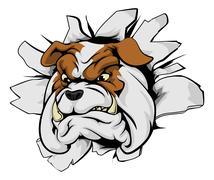 Bulldog breakthrough Stock Illustration