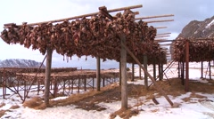 Fish are hung out to dry on wooden racks in the Lofoten Islands, Norway. Stock Footage