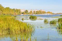 trees and reeds close to the river - stock photo