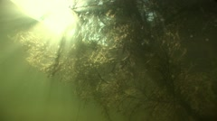 Sunlight penetrates underwater in mountain dam and illuminates branch underwater Stock Footage