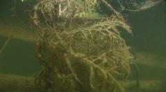 Sunlight penetrates into the water  and illuminates underwater tree Stock Footage