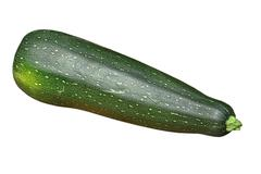 Zucchini vegetable.isolated. Stock Photos